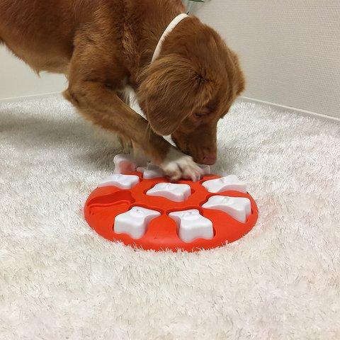 ニーナオットソン 知育玩具 DOG SMART Level1