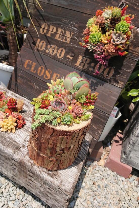 森のポット 糸島育ちの丸太の植木鉢