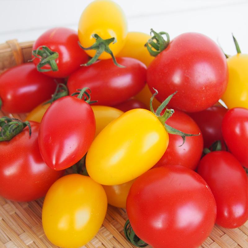 【産地直送】熊本県産 カラフルミニトマトセット 1.2kg ≪送料込み≫
