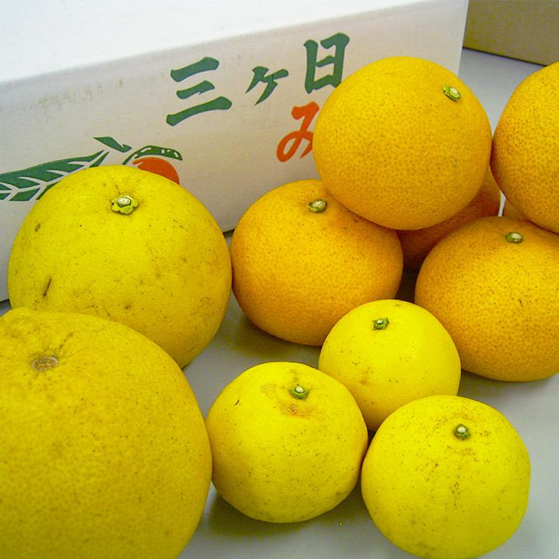 【産地直送】◆限定100箱◆静岡県産 外山さんのオレンジセット 5kg(5月お届け分) ≪送料込み≫