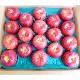 【産地直送】青森県産 りんご(ジョナゴールド) 5kg ≪送料込み≫