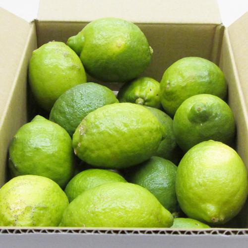 【産地直送】愛媛県産 レモン 2.5kg ≪送料込み≫