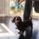 CBDオイル ブロードスペクトラム 小型犬&猫 ペット用 GreenRoads