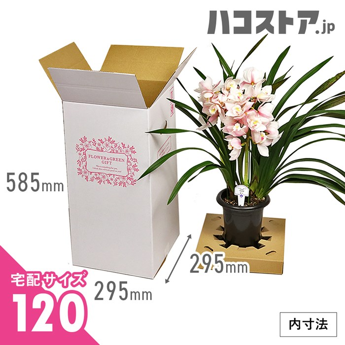【宅配120サイズM】フラワーギフト 発送BOX(鉢押えセット)