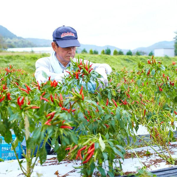【国産】熊本県人吉球磨産 一味唐辛子(30g)