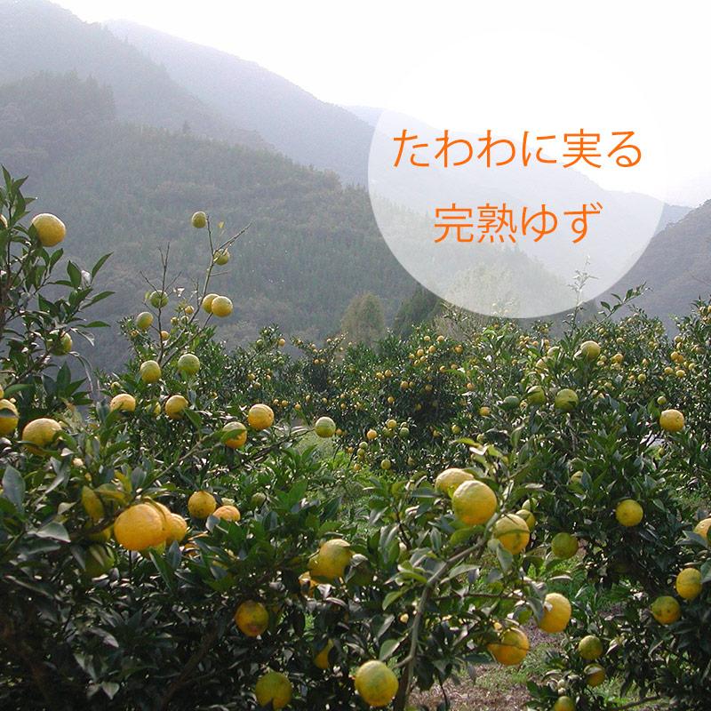 赤ゆずこしょう/かぐらの里(40g)|国産(宮崎県産)