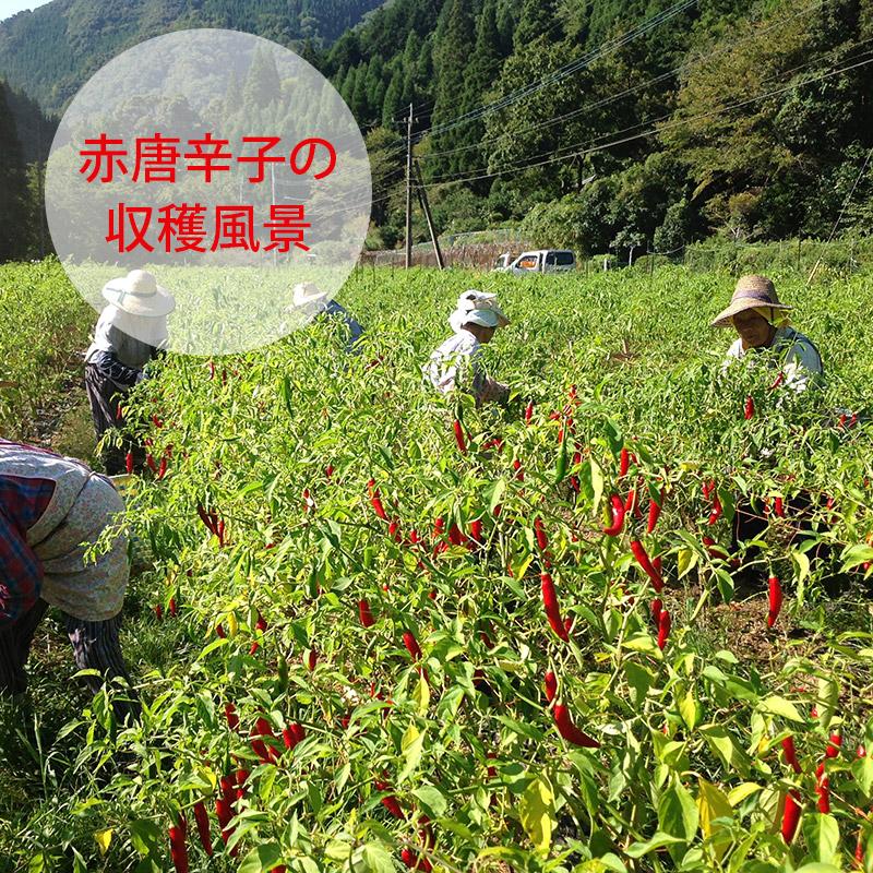 赤ゆずこしょう/かぐらの里(40g)10個セット|国産(宮崎県産)