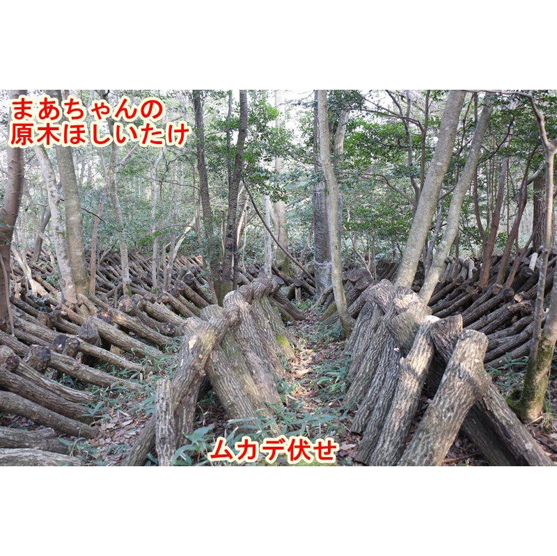 ★お取り寄せ★ほしいたけ 丸(100g)