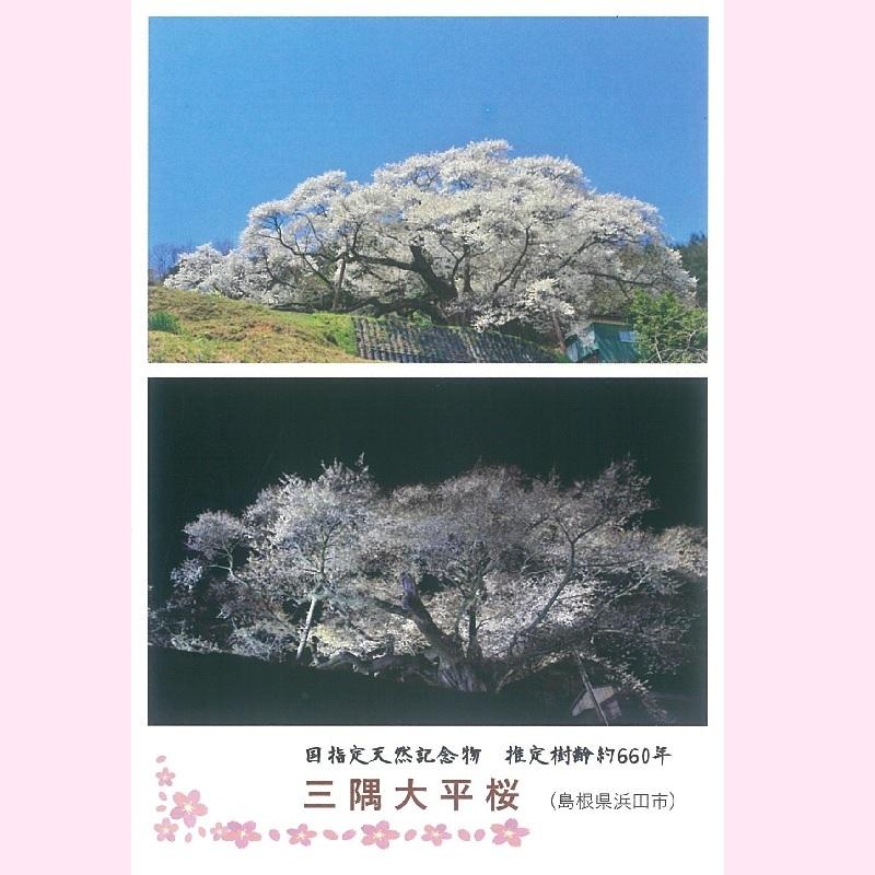 ポストカード(三隅大平桜〜昼と夜〜)