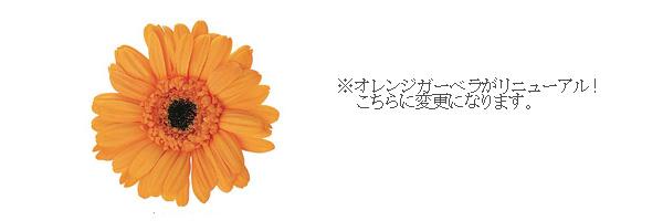 161212 オレンジガーベラ、グリーンバラケース入りアレンジ オーダーメイドプリザーブドフラワー
