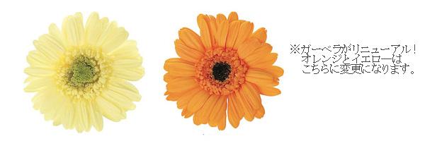140819 オレンジ、イエローガーベラとホワイト、イエローバラの壁掛け プリザーブドフラワー