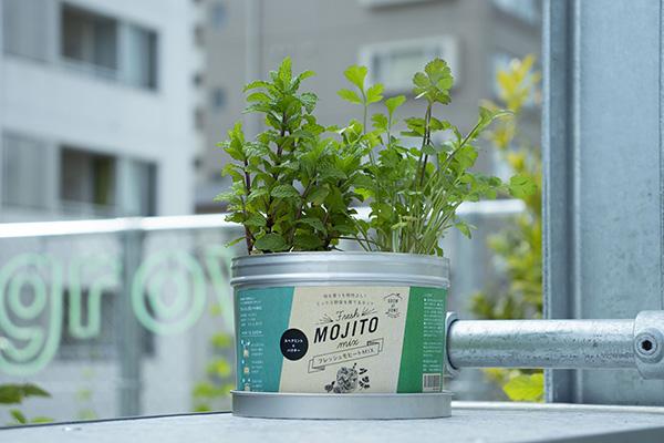 《期間限定5%OFF》味も香りも相性よし!ミックス野菜を育てるキット フレッシュモヒートMIX(ロット:8)