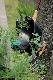 【予約商品】S&J ガーデンマスターグローブL(ロット:6)
