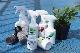 evo観葉植物とエアプランツが元気に育つ水(ロット:12)