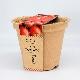 おうちで採れたて! 栽培キット ミニトマト(ロット:6)