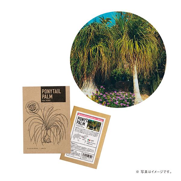 世界の植物のタネ トックリラン(ロット:8)