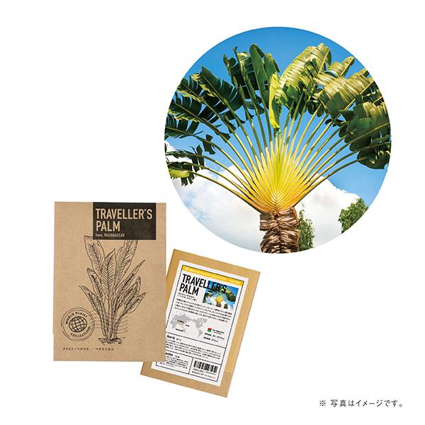 《期間限定5%OFF》世界の植物のタネ タビビトノキ(ロット:8)