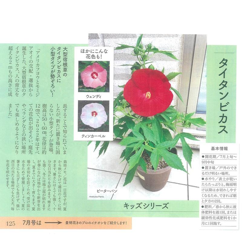 花の音限定販売 タイタンビカスキッズ ウェンディ苗 3.5号 ※8月2日以降出荷