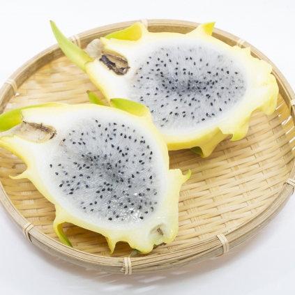 憧れのフルーツをお家で栽培! ドラゴンフルーツ イエロー (黄皮・白肉)