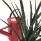 見たことないかも?珍しい サンスベリア ファーンウッド 4号 白陶器鉢仕様