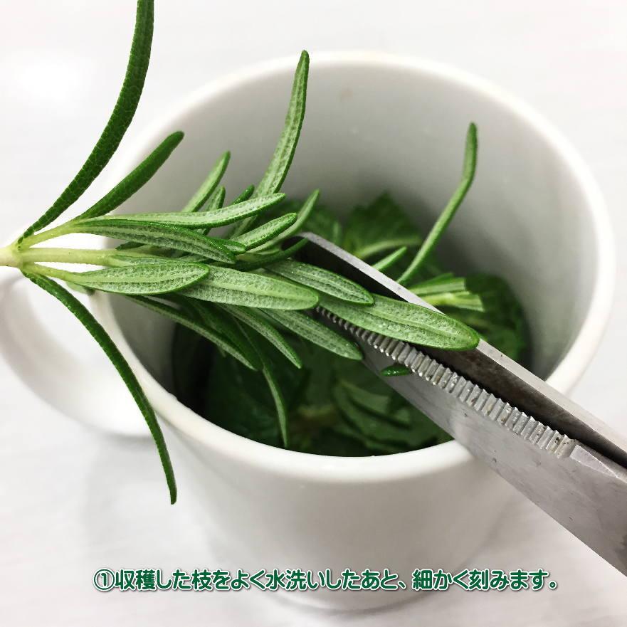 天然ハーブ苗と虫よけスプレー製作セット (ハーブ3種+プランター+スプレー)