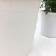 桐生ふぁーむの マーガレットモリンバサッシーイエロー栽培セット ※お届けまでに10日程度頂戴することがございます。
