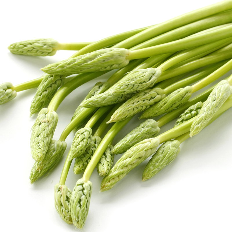 フランス山菜 アスパラソバージュ 3.5号 [pav]