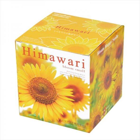 リニューアルオープン記念!鮮やかな黄色で明るい気分に! ミニヒマワリ栽培セット Himawari-bloom small-