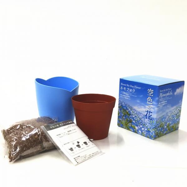 リニューアルオープン記念!澄んだ空色の花が咲く ネモフィラ栽培セット Bloom Sky blue Flower