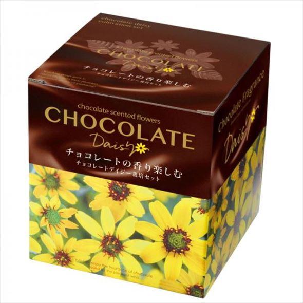 リニューアルオープン記念!あま〜いチョコの香り? チョコレートデイジー栽培セット Chocolate Daisy-scented flower-