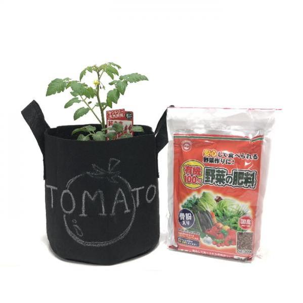 もう植えてある!今年の夏は、おうちトマトでサラダ♪ ミニトマト栽培セット