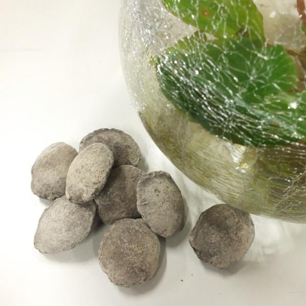 スイレンの肥料(8粒入り) ※ネコポス便専用商品