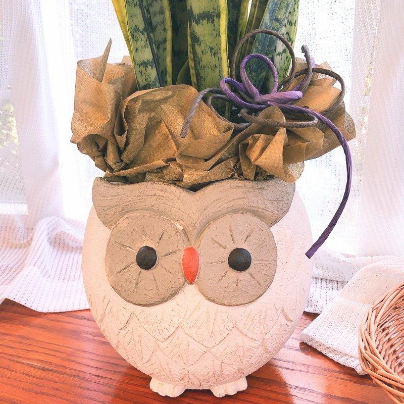 フラワーギフト 陶器鉢(フクロウ・白)-PA