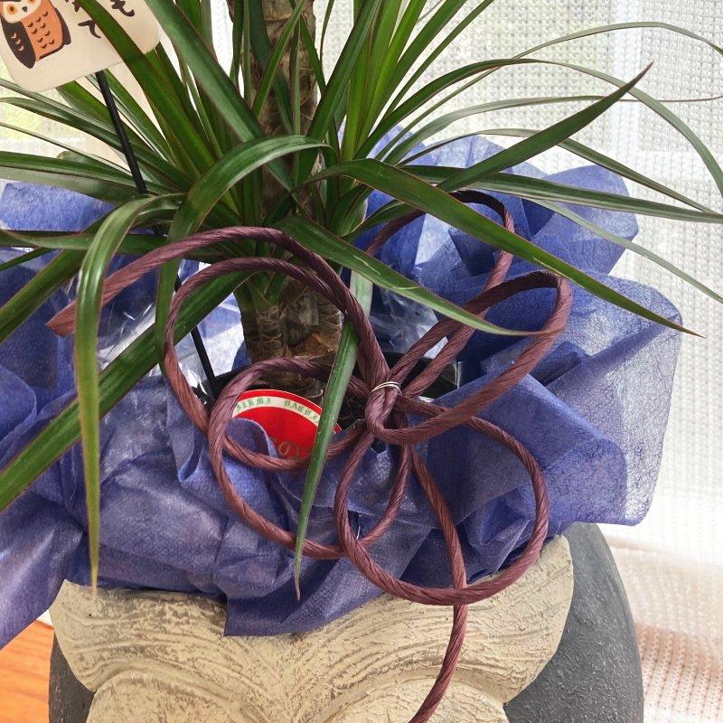 フラワーギフト 陶器鉢(フクロウ・紺)-PA