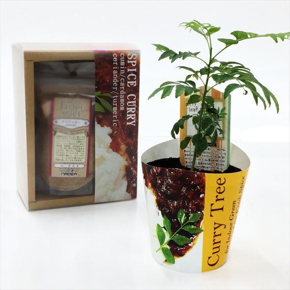 カレーの木と4種のスパイスセット こだわり派ギフト・当店オリジナル