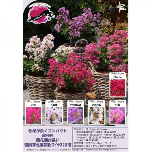 7回も!!繰り返し咲く花あふれる サルスベリ WithLove チェリー 5号ポット苗 ※お届けに10日程度かかる場合がございます。(OR)