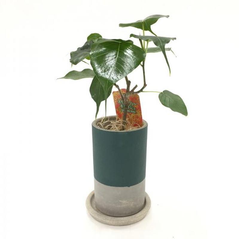 創業60周年記念 キッチングリーン コーヒーの木 (茶陶器)