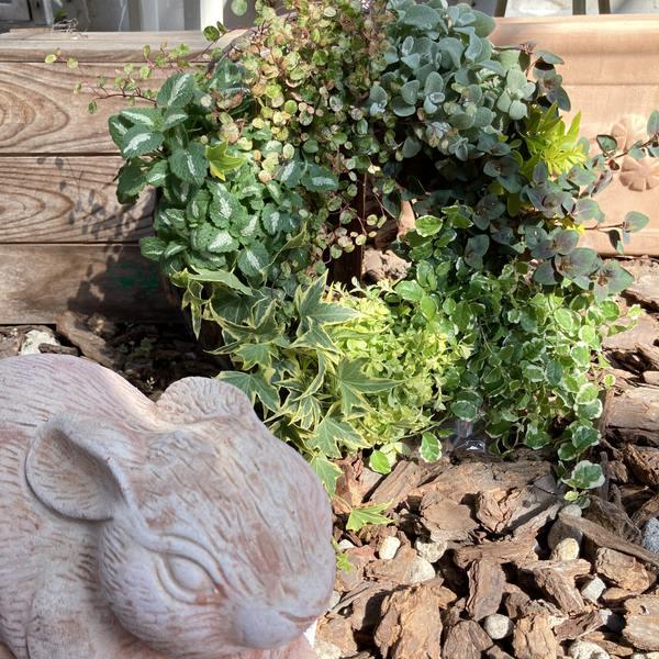 桐生ふぁーむさん作 カラーリーフの寄せ植えリース ※10日ほどかかる場合がございます。 (KI)