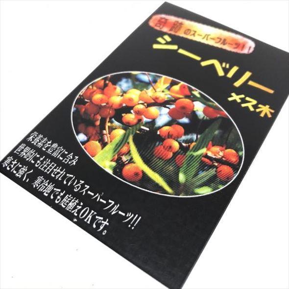 栄養満点!話題のスーパーフード シーベリーの苗 雄×雌セット 6号