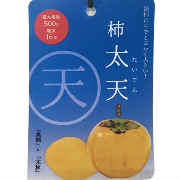 柿 太天(たいてん) 4号