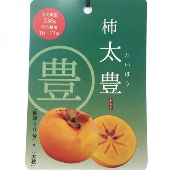 柿 太豊(たいほう) 4号
