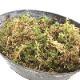 蘭や食虫植物の植え付けに! 生きたままの生ミズゴケ 1.5L [TK]  ※お届けまでに10日程度かかることがあります。