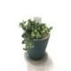 創業60周年記念 キッチングリーン プミラ コアラ (緑錐陶器)