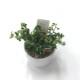 キッチングリーン プミラ コアラ (白陶器)