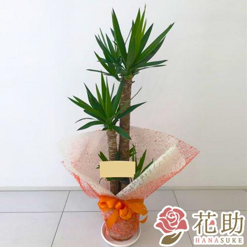 おまかせ観葉植物 10000円
