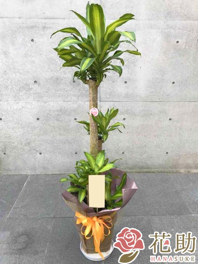 おまかせ観葉植物 15000円