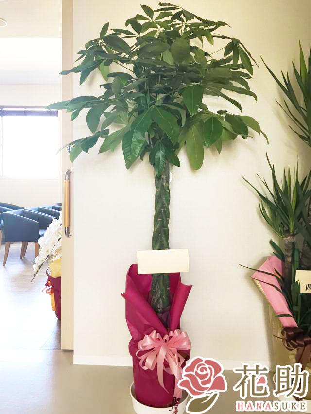おまかせ観葉植物 20000円