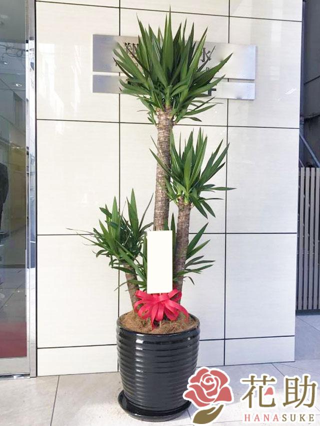 観葉植物 30000円