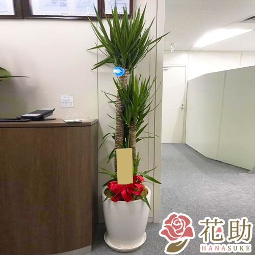 【おしゃれな鉢カバー付き】 おまかせ観葉植物 30000円
