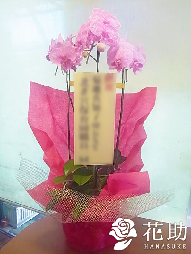 おまかせ花鉢 12000円